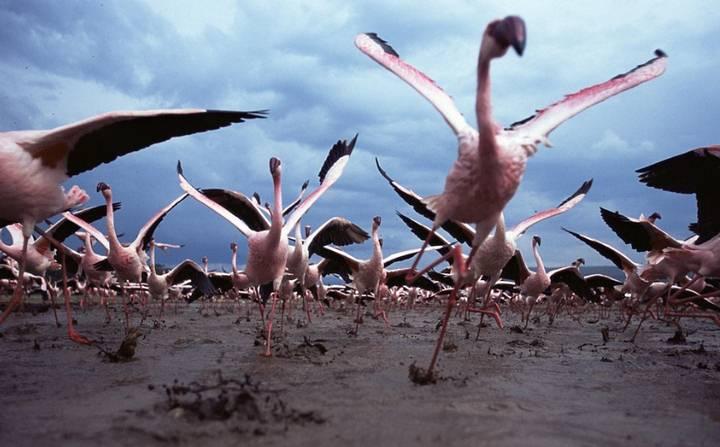 Iniciar un vuelo es un problema que las criaturas voladoras reales afrontan de diversas maneras. Las aves saltan con sus dos patas o usan la fuerza de sus alas para emprender el vuelo, bien desde el sitio o bien después de una carrera de despegue.