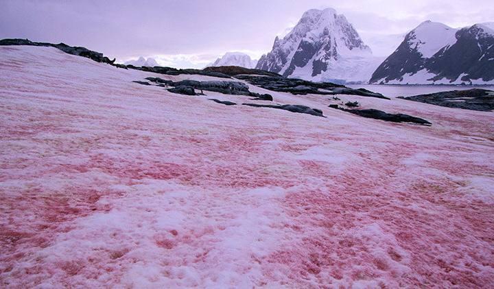 nieve-rosa1