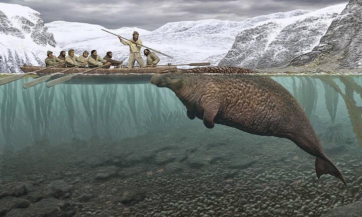 Reconstrucción de la caza de una vaca marina de Steller. Ilustración de Carl Buell.