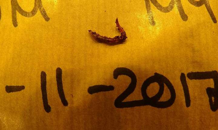 worms-earthwormsca