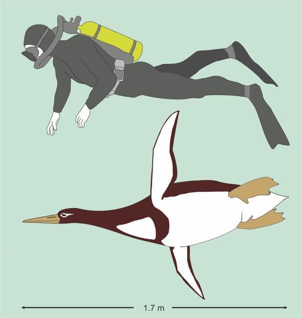 pinguin-gigante