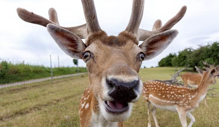 deer-zombie