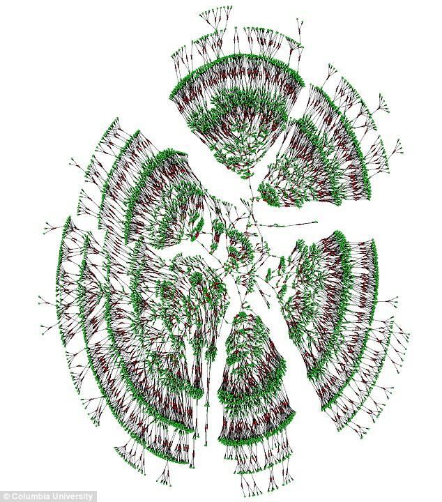Una rama del nuevo árbol genealógico masivo que muestra 6000 parientes que abarcan siete generaciones, con los matrimonios en rojo. Crédito: Universidad de Columbia.