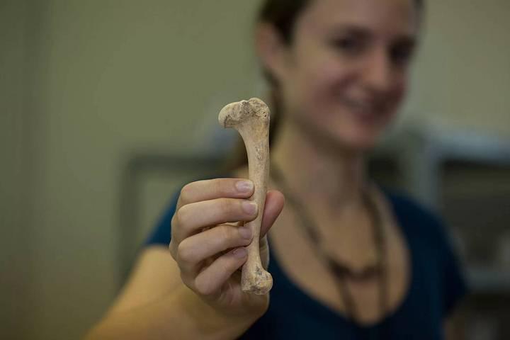 La arqueóloga Ashley Sharpe sostiene un húmero de perro hallado en el sitio maya de Ceibal, Guatemala.