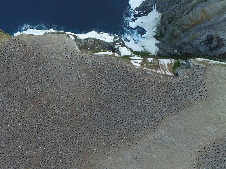 colonia-pinguinos