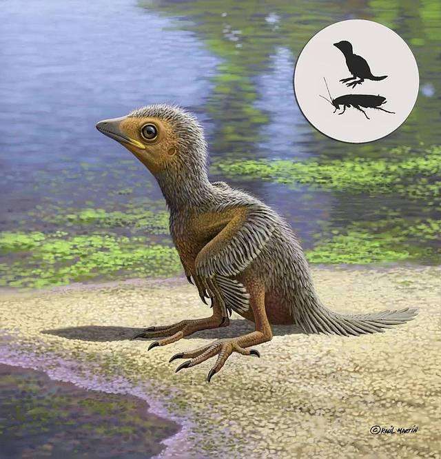 El espécimen, una rareza, se encuentra entre los fósiles aviares mesozoicos más pequeños jamás descubiertos.