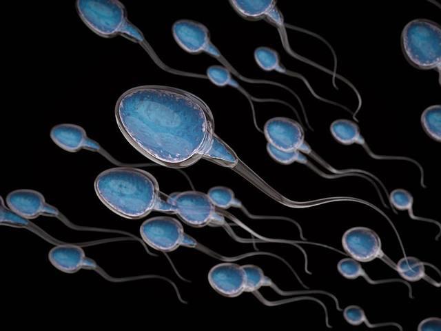 esperma-iss