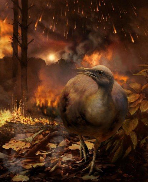 aves-suelo