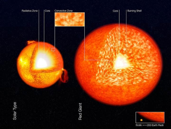 Ilustración de la estructura del Sol y una gigante roja, mostrando sus zonas convectivas. Estas son las zonas granuladas en las capas exteriores de las estrellas.