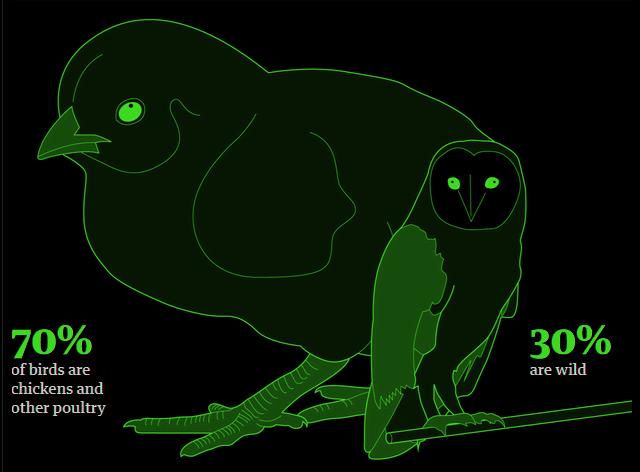 El 70% de todas las aves del planeta son actualmente aves de corral, y solo el 30% restante son aves salvajes.