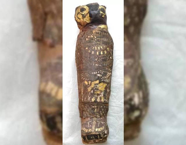 La forma del cartonaje de la momia se asemeja a la de un halcón. De allí que los científicos pensaran que contenía un ave.
