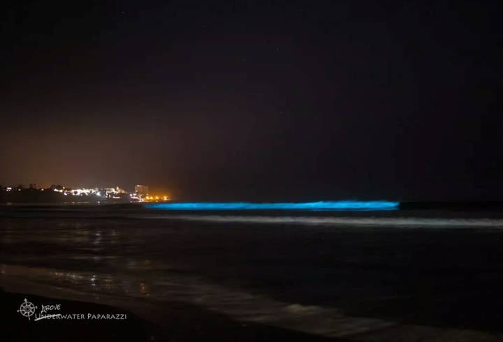 «Es realmente de un color azul eléctrico y es hermoso», Jami Leslie Feldman, dueña de Underwater Paparazzi.