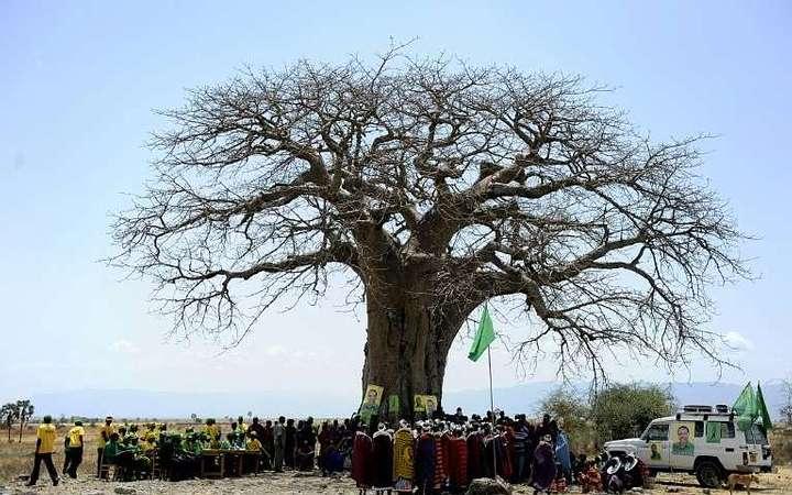 Baobab en Zimbabue.