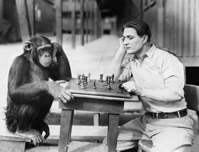 Genéticamente, solo un 1 % nos separa de los chimpancés.
