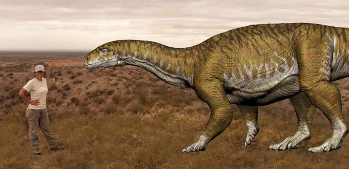 Dra. Apaldetti junto a una ilustración del dinosaurio encontrado.